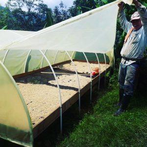 Proceso de secado, café de finca, café de origen, café las margaritas, café grano, café molido