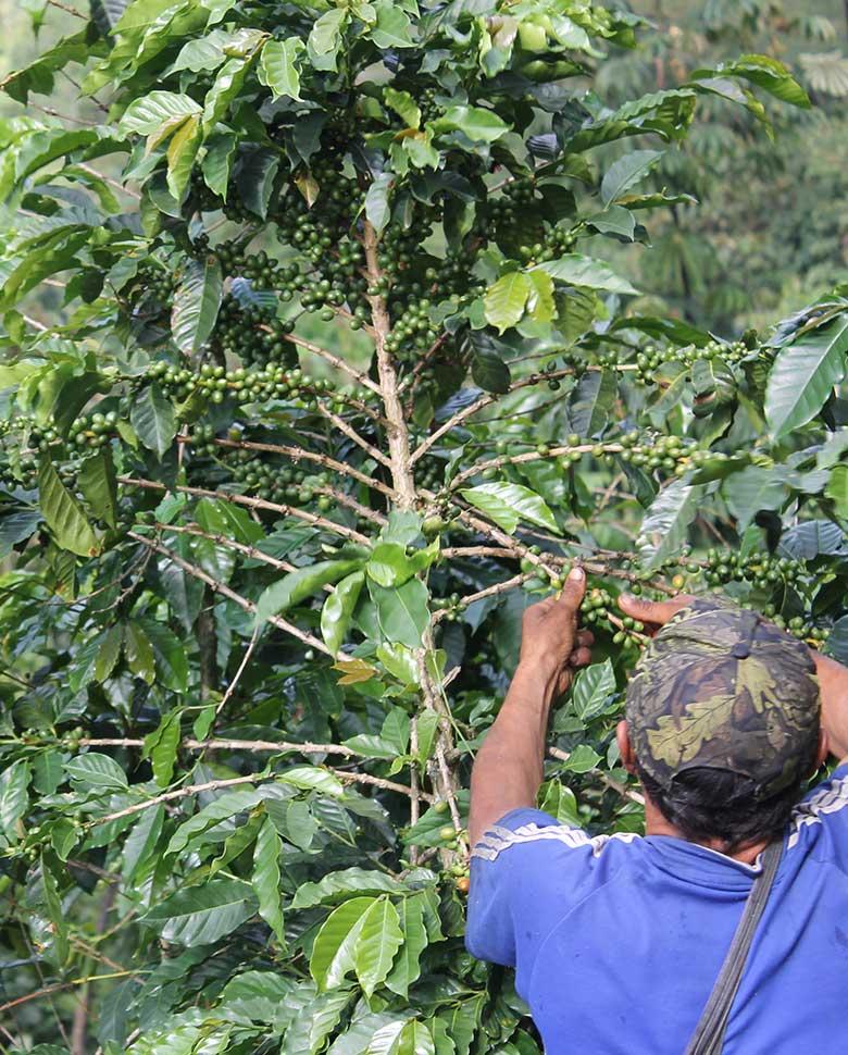 Caficultores,agricultores, Café Las Margaritas Especial Tipo Exportación, Vendedores de Café Colombiano, café origen